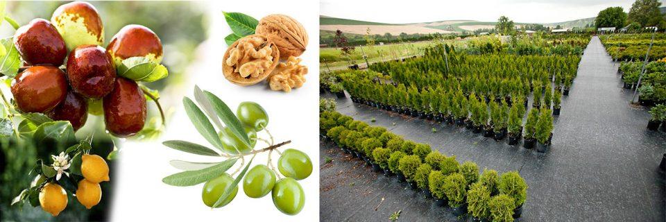 Türkiye 'nin her bölgesine meyve fidanı satışı.