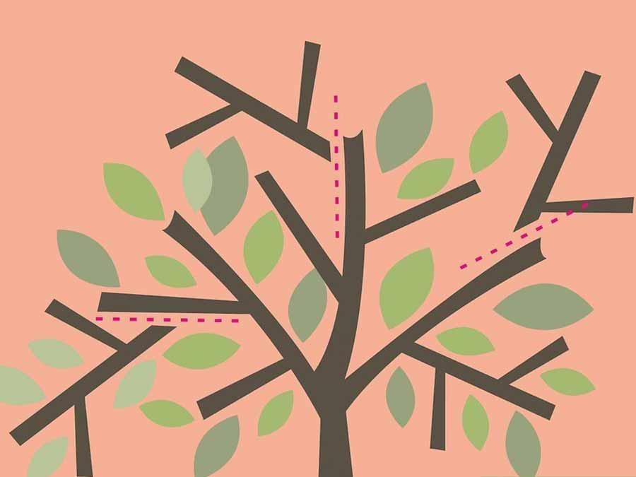 Zeytin Ağacı Nasıl Budanır?